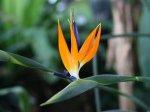 В Иркутске пройдёт выставка живых тропических бабочек «Ожившие цветы»
