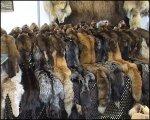 В Петропавловске-Камчатском впервые пройдет выставка пушно-мехового сырья