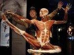 В Праге открылась выставка человеческих тел