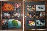 В Рязани открылась выставка подводного фотографа