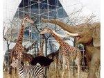 Животные на войне. Выставка в Дарвиновском музее