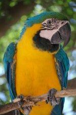 Челябинский краеведческий музей представляет выставку «Почему мы любим птиц»