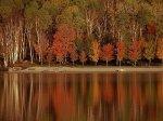 """Фотовыставка """"Лесные истории. Осень"""" откроется на Патриарших прудах"""