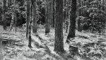 Гравюры Ивана Шишкина впервые покажут в Красноярске