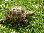 В Ульяновске откроется выставка фотографий дикой природы «Золотая черепаха»